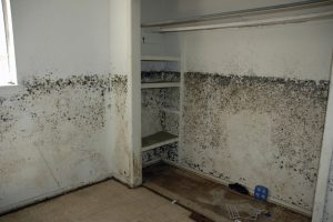 Greensboro mold, winston salem mold, Burlington mold, mold in house at Greensboro